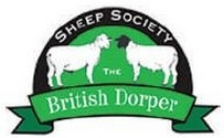 Dorper Sheep at the RWAS Spring Festival