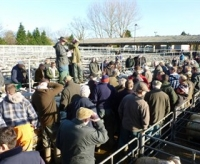 Oswestry Livestock Auctions
